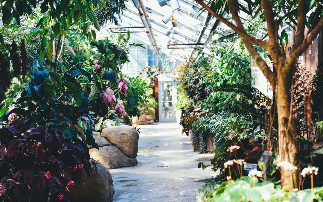 Greenhouse Affect